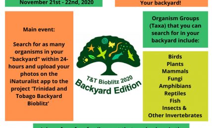 Bioblitz 2020 Backyard Edition